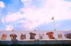 All Pets Go To Heaven (Steve Lundqvist) Tags: bridge sky dog pet cats dogs cane cat advertising open ponte gatto gatti animali cani pubblicita