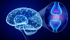 (Hypnotisk) Tags: brain neuron cell concept logic neural human network head data process abstract system nerve nervous wisdom micro dendrites physiology medical axon algorithm active receptor impulse contemporary tissue hormon neurology nucleus connection nucleon science transparent think inside anatomy concentration xray synapse
