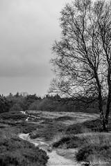 DSCF0194 (Klaas / KJGuch.com) Tags: drenthe netherlands nature natuur decemberwalks walkingindecember naturereserve naturereservation heath blackwhite fujifilm fujifilmxpro2 xpro2 wandeling wandelen hiking outandabout trees