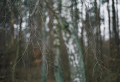 12.2016 (nnnnikt) Tags: forest tree sticks outdoor autumn film