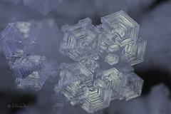 Weihnachtsgrüsse / Christmas greetings (Claudia Bacher Photography) Tags: eis ice eisblumen iceflowers makro macro suisse schweiz switzerland sonya7r graubünden natur nature outdoor winter