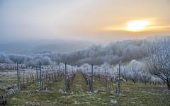 Zagorje (08) - frost (Vlado Ferenčić) Tags: zagorje hrvatska hrvatskozagorje veternica trees croatia nikond600 nikkor357028 frost