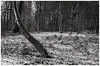 Oxfordshire Landscape, 13 January 2017. (Flat Twin) Tags: oxfordshirelandscape oxfordshire tmy2400 leicam6 leicaelmarm50mmf28 snow winter winterscene perceptol1211mins