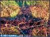 Rote Äste über dem Wasser (almresi1) Tags: spiegelung mirroring river rems flus baum tree äste bunt colourful herbst winter muster farben waiblingen