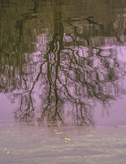 Alluring Reflection Prominence At Central Park Lake - Winter Season 2016-2017 (nrhodesphotos(the_eye_of_the_moment)) Tags: dsc01317372 winterseason20162017innyc centralpark nyc manhattan season winter reflections shadows outdoor lake plantlife waterfront texture