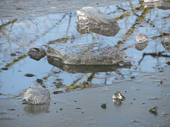 21/1/2017, 21/365, Breaking up the ice IMG_2123 (tomylees) Tags: ice pond braintree essex publicgardens january 2017 21st saturday project 365