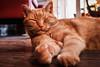 My Cat (Dasto003) Tags: cat home chillig orange garfield sweet nice sleepy
