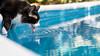 _DSC2272 (julianmartinez_) Tags: cat buddy thirsty pool summer water nikon friend