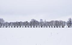 05/52 (wirsindfrei) Tags: 52in2017challenge snow winterwonderland winter badenwürttemberg landscape weis landschaft rottweil spaichingen nature natur nikond60 nikon outdoor schörzingen repetition minimalism
