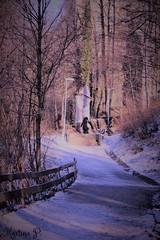 Sliders Sunday... (martinap.1) Tags: sliders sunday landscape fence nature nikon d3300 7dwf trees