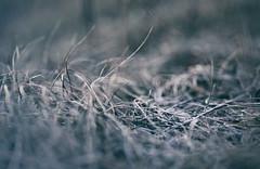Kommt jemand mit raus? Den Wiesen beim Frieren zusehen und morgen früh die Dörfler über die von uns aufgetauten Stellen rätseln lassen. (Manuela Salzinger) Tags: winter schwarzwald blackforest morgen morning wiese meadow frost sonnenaufgang sunrise