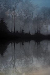 Winter Fog Reflections (imageClear) Tags: fog soggy wet reflections winter trees quiet peaceful beauty nature aperture nikon d500 80400mm imageclear flickr photostream water sheboygan wisconsin