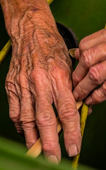 Story lines (risaclics) Tags: 7dw 85mm18 florida macro naturallight nikond610 november2016 hands manos portraits rose smileonsaturday facelessportrait