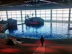 Anglų lietuvių žodynas. Žodis aquarium reiškia n akvariumas lietuviškai.
