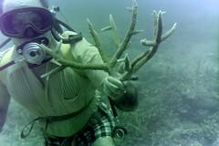 n0005.26 (avaragado) Tags: barbados coralreefclub fd197504 fd197604 fd197905 n0005 tonysmith