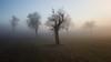 wer gewinnt? (Danubio!) Tags: schwäbischealb badenwuerttemberg badenwürttemberg explore nebel