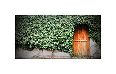 Secrets (CJS*64) Tags: secrets door gate green grow nikon nikkorlens nikkor nikon1 nikonj5 j5 cjs64 craigsunter cjs garden