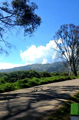 Al lado del camino. (valentitinab) Tags: carretera colombia tenjo sombra arbol verde azul nube cielo contraste caminar tranquilidad dia iphone