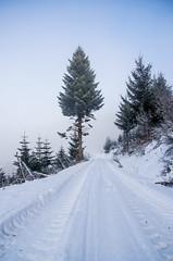 IMGP5778 (laurec.) Tags: allemagne balade neige oppenau