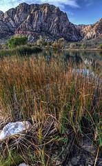 Spring Mountain Ranch Pond (Thomas Dwyer) Tags: nevada lasvegas redrockcanyon springmountains pond springmountainranch nikon d7000 tokina1224 landscape thomasdwyer scenicsnotjustlandscapes clarkcounty mountain highdesert preserve