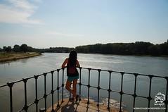 DSC08714t (bornvoyage) Tags: france avignon provence pont davignon bridge lavender cut 法國 亞維儂 亞維儂大橋 橋 古橋 old oldbridge 薰衣草 river rhone 羅納河 普羅旺斯