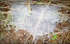 20150820_101442 copy (cora.anne) Tags: cobweb hayfield flimsy moisture finespun