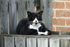 Cat on bin covers (Moldovia) Tags: blackandwhite pet animal cat blackwhite feline catalog catpix bridgecamera catspotting catmoments catnipaddicts catsunleashed fujifilmfinepixhs50exr