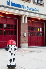314 (-Dons) Tags: dog toronto ontario canada hydrant dalmation firehydrant 314 firestation explored torontofirestation torontofirestation314