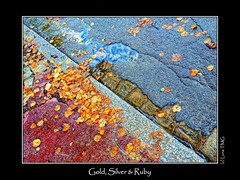 Gold, Silver & Ruby / Or, Argent & Rubis (Luna TMG) Tags: street reflection fall automne leaf reflet automn rue feuille