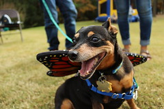 """Dogs, dog park, richmond • <a style=""""font-size:0.8em;"""" href=""""http://www.flickr.com/photos/31682982@N03/21901225194/"""" target=""""_blank"""">View on Flickr</a>"""