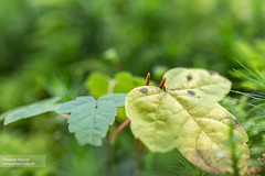 Herbstbltter (c_hancke) Tags: wood autumn sun macro green nature leaves yellow canon herbst ground leav