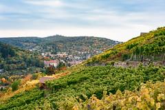 Stuttgart Wineyards in Autumn