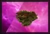 Moons of Moria Vacations (Rick-Willis) Tags: fractal mandelbulber ononesoftware topazlabs adobelightroom