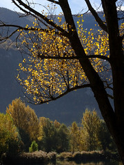 automne 2015_4 (JMVerco) Tags: autumn tree fall automne switzerland suisse albero autunno arbre valais coth swizzera sunrays5