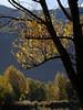 automne 2015_4 (JMVerco) Tags: autumn tree fall automne switzerland suisse albero autunno arbre valais coth swizzera sunrays5