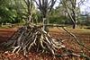 Pile o' Sticks (Lucian Wheeler) Tags: autumn nature forest sticks woods autumnal