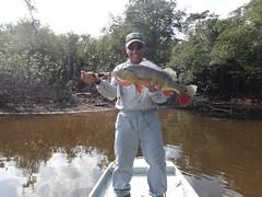 Amazonia 2012 (10)