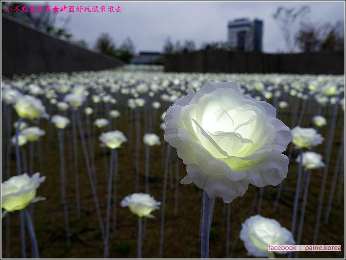 東大門DDP LED玫瑰花展 (3).JPG