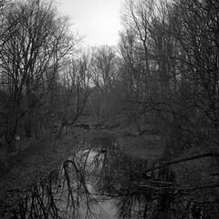 Mill Pond - Diacord L (Blia100) Tags: ontario canada film mediumformat milton ricoh analogphotography ccr millpond xtol filmphotography rikenon diacord diacordl rolleirpx100 classiccamerarevival