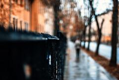 90/365 Allusive Afternoon (ewitsoe) Tags: street autumn fence 50mm nikon poland blurred dif poznan narrowfocus nikond80 fwnce ewitsoe erikwitsoe