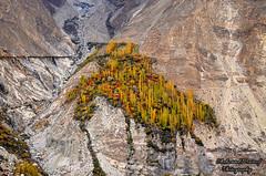 Autumn Splendor (Shehzaad Maroof Khan) Tags: autumn pakistan nikon rocks december rocky karakoram hunza range mountainday splendor gilgitbaltistan