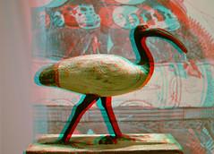 IBIS priest Spoteu 3D (wim hoppenbrouwers) Tags: ibis priest spoteu 3d rmo leiden anaglyph stereo redcyan bird vogel amonra osorwer