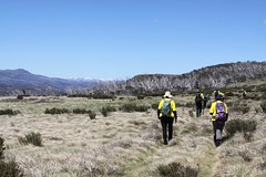 Another day at the office (Environment + Heritage NSW) Tags: officeofenvironmentandheritage orangehawkweed orangehawkweedcontrolprogram weed weedcontrol weedprogram eradication survey huntinghawkweed hawkweed mouseear volunteers volunteerprogram volunteer