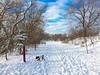 Red pole marks the spot :-) (lezumbalaberenjena) Tags: winter hiver invierno frio cold froid nieve niege snow white blanco blanca blanc blanche ottawa rideau river trail 2016 december diciembre decembre dog perro chien chiot boston terrier bully