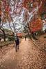 Autumn. (aludatan) Tags: autumn leaf red yellow green tree tokyo ueno japan travel outdoor 日本 东京 秋季 秋天 旅行 上野 streetshot nature landscape