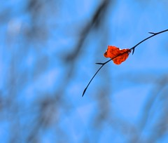 A Splash of Red (Edinburgh Photography) Tags: nature landscape outdoors leaf red water leith nikond7000