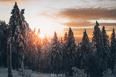 Snowy Sunset (Niklas W.) Tags: snow snowy mountain mountains deutschland germany tree taunus hessen wald wälder wolken wood wonderland winter wolke woods sunset sun sonnenuntergang