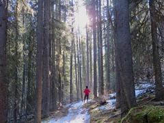 West Bragg Creek Winter Hike - Various trails - Larry on the trail (benlarhome) Tags: braggcreek westbraggcreek alberta canada hike hiking trek trekking trail path