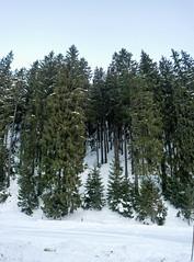 Synevir Forest