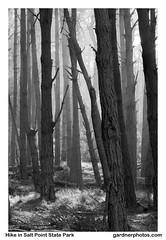 Hike in Salt Point State Park (gardnerphotos.com) Tags: saltpointstatepark sanfrancisco california hiking highway1 hwy1 route1 pacificocean